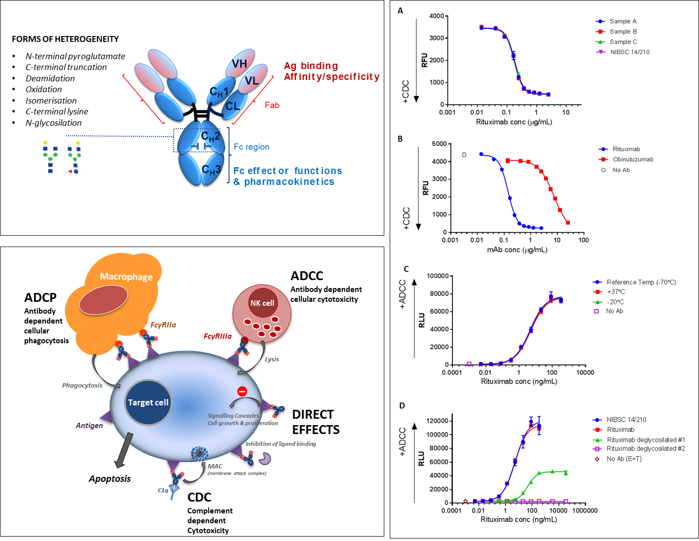 The structure of IgG and typical forms of mAb heterogeneity